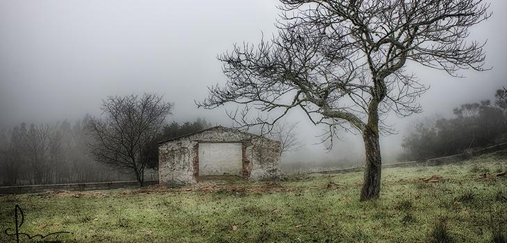 Manhã de Nevoeiro  - Carla Fernandes