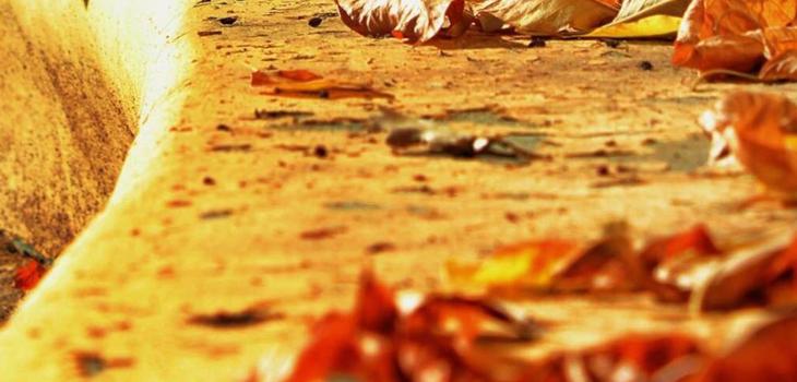 Outono - Susana Muralhas
